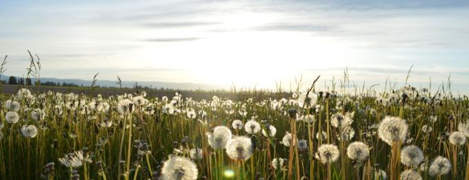 Campo de flores - foto Jason Long