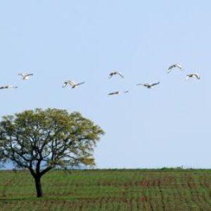 aves-vuelo